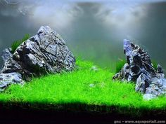 L'iwagumi est une technique de l'aquascaping avec des rochers comme point focal Aquascaping, Aquarium Landscape, Tanked Aquariums, Fish Tank, Fresh Water, Rock Formations, Scp, Point, Terrarium