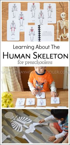 Learning about the human skeleton for preschoolers
