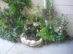 Our front entry pond complete with guppies and carnivorous plants
