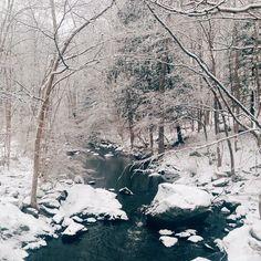 winter scene -- woods in snow