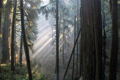 Jedediah's redwoods: Yahoo! Travel photo of the day