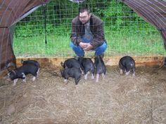 Heritage Pork Berkshire Pigs