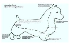 dog grooming chart that shows hair length | New blog with updated tips for grooming your Aussie can also be found ...