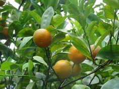 Production bio d'huiles essentielles Slow Travel, Mauritius, Agriculture, Gardens, Sustainable Tourism, Tropical Garden