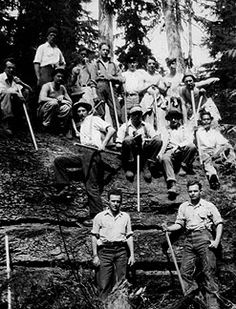 Photo taken by William A. Eastman Jr.,' 33 in April 1931 shows some members of his sophomore class at the site of the fallen Tree of Mineral, WA. Professor Alexander's class at Pack Forest, having just finished constructing Biltmore-Hypsometer sticks, traveled to Mineral where they visited this giant Douglas-fir which had fallen during a 1929-1930 winter storm. The class took various measurements and it was estimated that the tree was 1,020 years old when it fell, 15.4 ft dbh and 385 ft tall.
