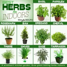 best indoor herbs