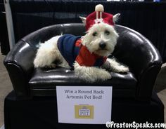 2013 Vegas Pet Expo.  We gave away this awesome bed!