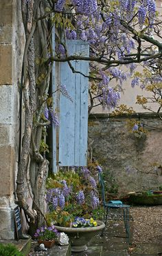 Spring in Provence and Berowra Heights. I am taking a large pot of Wisteria with me to spread some much needed style into this new house.