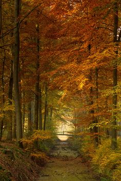 The little forest bridge in autumn,