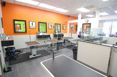 Dog grooming rooms the green leaf dog grooming room complete with floating grooming stations solutioingenieria Images