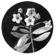 """The Outside Story: """"Mountain Laurel,"""" by Laurie D. Morrissey. Illustration by Adelaide Tyrol. """"If you were fortunate enough to grow up with freedom to roam outdoors, there are likely certain places that stick with you. For me, one of these places is a thicket of old mountain laurels that my brother and I hiked through…"""""""