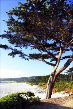 Carmel Beach, Carmel CA.