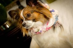 floral wedding dog collar