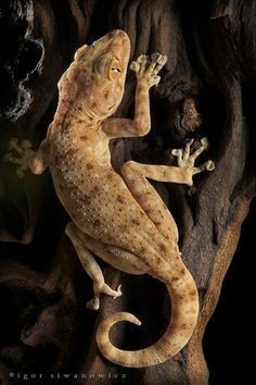 A gallery of some amazing animal pictures. Les Reptiles, Cute Reptiles, Reptiles And Amphibians, Mammals, Animals And Pets, Cute Animals, Amazing Animal Pictures, Tortoises, Animal Kingdom