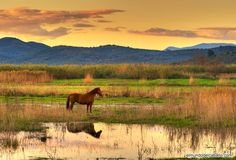 Love horses! this image its so colorful