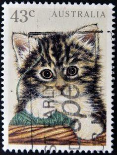AUSTRALIA - CIRCA 1991: A stamp printed in Australia shows image of a kitten, circa 1991