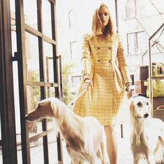 60s-style coat and beautiful, gaunt-faced elegant dogs.