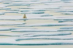 A polar bear rests on melting ice in the Arctic in this National Geographic Your Shot Photo of the Day.