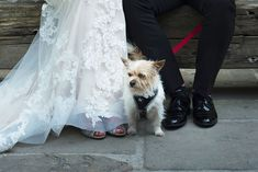 The smallest, yet most important guest. A real wedding by Couple Photography. Cliff, Couple Photography, Summer Wedding, Real Weddings, Couples, Couple, Couple Pictures