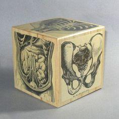Anatomical Medical Anatomy Art Block by dadadreams