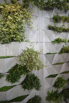 living plant wall concrete wall - Google Search