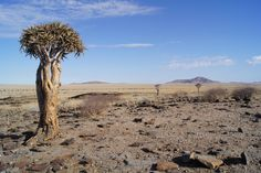 Africa Travel, Monument Valley, Nature, Naturaleza, Nature Illustration, Outdoors, Natural