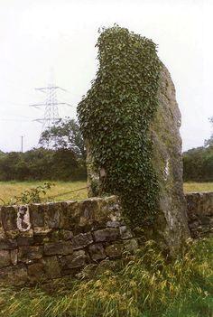 Maen Addwyn a.k.a. Maenaddwyn Standing Stone County: Anglesey (Ynys Môn)