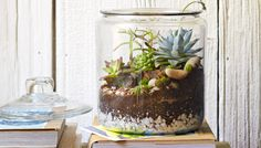 A glass cookie jar makes a perfect home for a tabletop garden full of succulent plants.