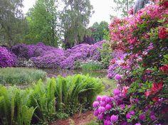 rododendron - Szukaj w Google