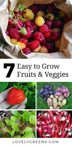 When starting your first garden, keep it simple with these easy to grow fruit, herbs, and vegetables. Theyre simple to maintain and give bang for your buck #veggiegarden #easytogrow #easytogrowveg #vegetablegarden #firstgarden #growfood #perennials