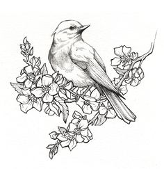 State Birds & Flowers on Behance