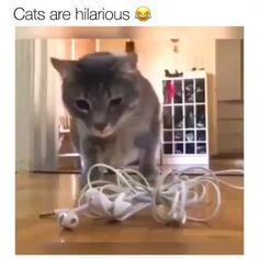 Ideas Gatti Divertenti Funny Cats Lol For 2020 Funny Animal Memes, Cute Funny Animals, Funny Animal Pictures, Cute Baby Animals, Cat Memes, Animal Humor, Funny Quotes, Laugh Quotes, Cat Quotes