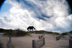 Wild Horses Outer Banks North Carolina