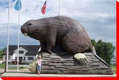 World's Largest Beaver: fittingly, at Beaverlodge, Alberta. The 3000 pound Beaver sculpture, is 15 tall, 18 feet long & sits atop a 20 foot long log. This unique landmark was built in 2004 to celebrate the town's Anniversary. Canada Memes, Canada Eh, Statues, Northwest Territories, Western Canada, Roadside Attractions, Alberta Canada, Canada Travel, Worlds Largest