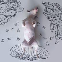 Brasileiro usa habilidades no desenho para colocar seu cão em situações inusitadas - Somente Coisas Legais