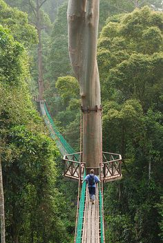 Borneo Rainforest Canopy Walkway  ( by Jollence Lee) This would be an awesome place to visit!