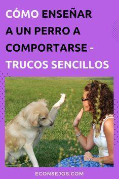110 Ideas De Tiernitos Perros Mascotas Entrenamiento Perros