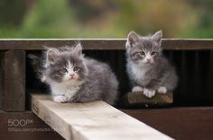 Cute kittens by CamillaKorsnes. @go4fotos