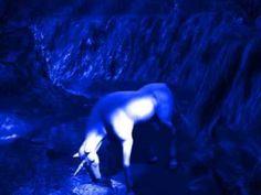 Mi Unicornio Azul