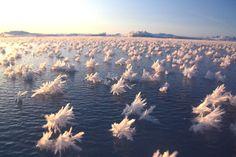 Les fleurs de givre de l'Arctique : 30 phénomènes naturels extraordinaires - Linternaute.com Voyager