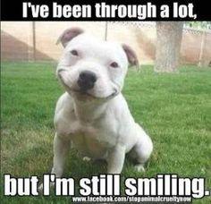 smiling-staffy