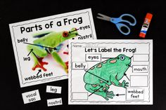 Engage your class in an exciting hands-on experience learning all about frogs! This Frog Animal Study is perfect for science in Preschool, Pre-K, Kindergarten, First Grade, and Second Grade classrooms and packed full of inviting Kindergarten Lesson Plans, Kindergarten Science, Frog Activities, Sequencing Activities, Frogs Preschool, Frog Facts, Frog Habitat, Lifecycle Of A Frog, Frog Illustration