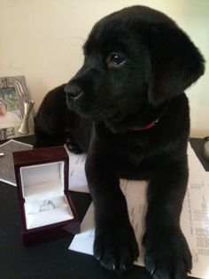 A puppy & engagement ring?! Who wouldn't say yes to that?