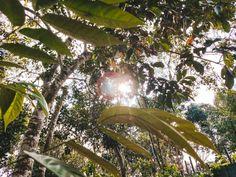Plant Leaves, Photograph, Plants, Fun, Photography, Photographs, Plant, Planets, Fotografia