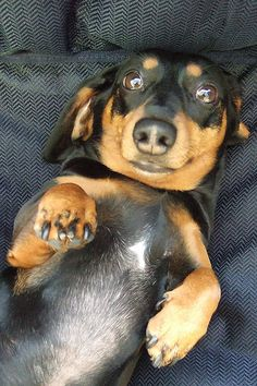 somebody needs a belly rub