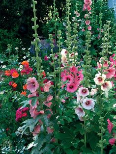 I want oooooodles of these growing around our property, they are wonderful for bees and hummers! #KMGLIFE