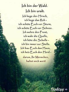 Gedicht schnee wald