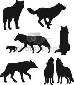 silhouette wolf isolated stock photo