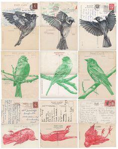 Flock of Birds | Mark Powell