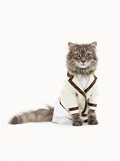 Cat in Sports Jacket.